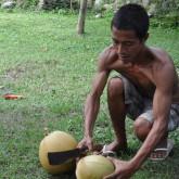 Färska kokosnötter